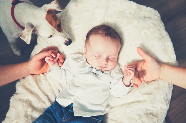 Touch of the family. Hands of parents and their baby in the bed. Dog watching the sleeping boy.