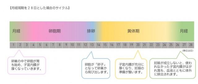 月経周期を28日とした場合のサイクル